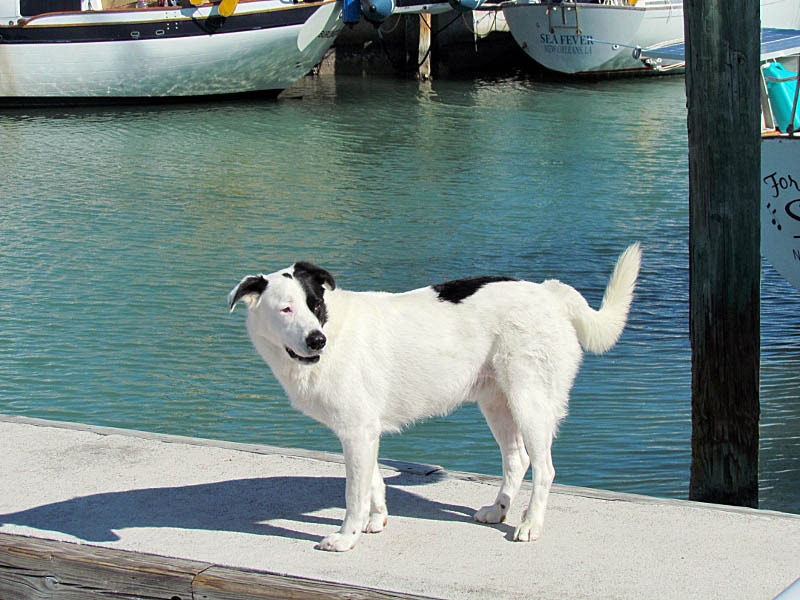 Ripple – A Dockmates Canine Crew