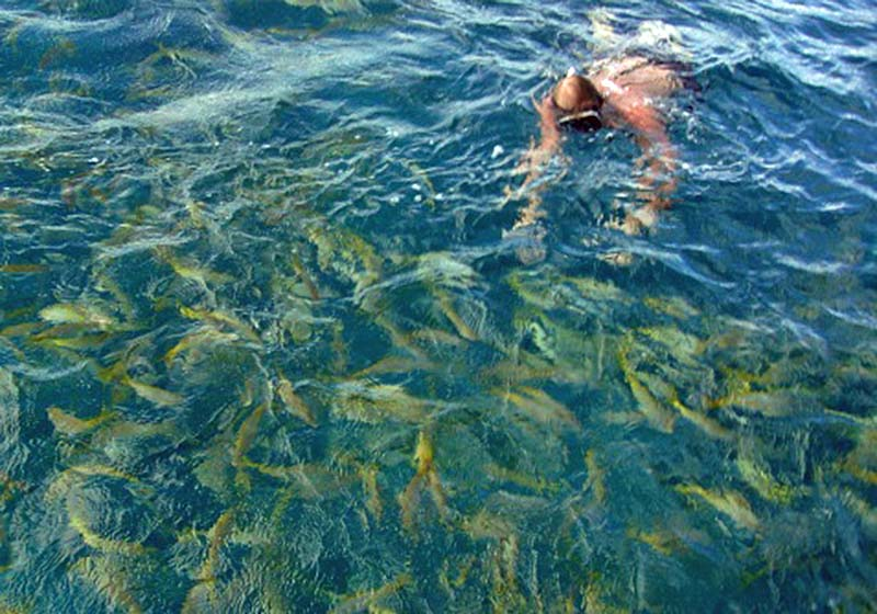 Dave Swimming with the Yellow Tail Snappers