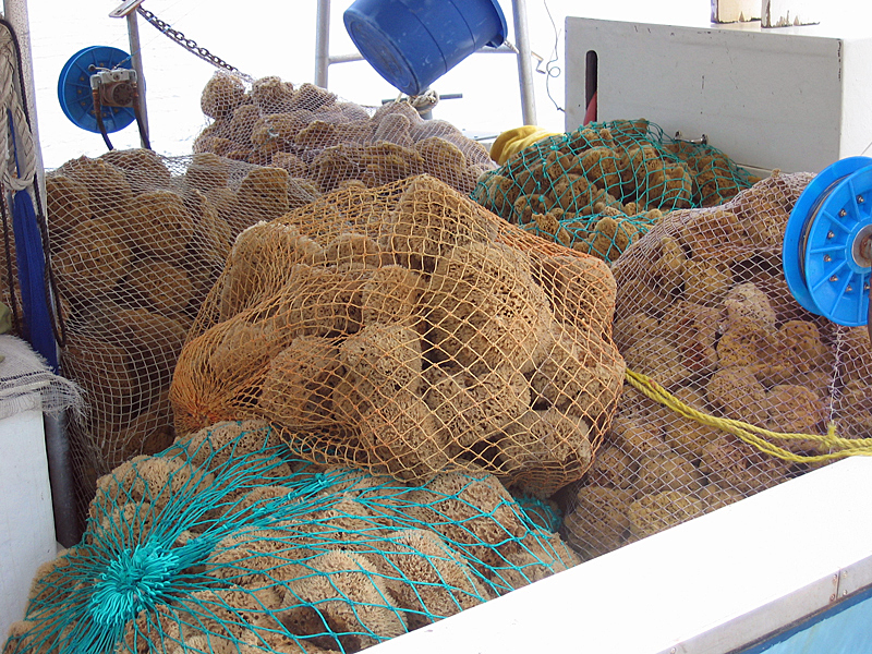 Sponges Ready for Market